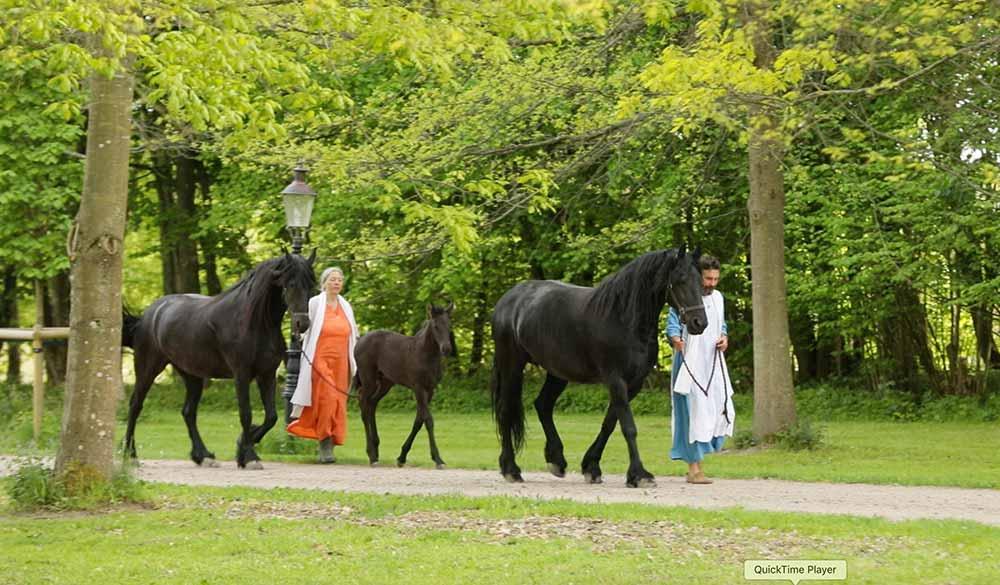 Divinya-community-horses-