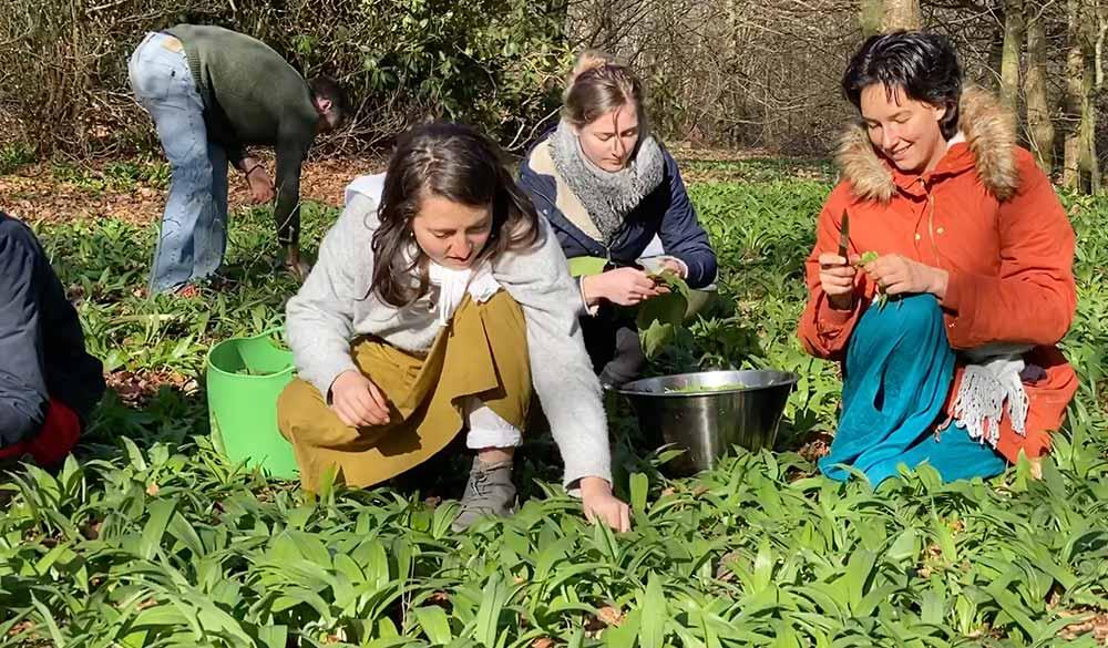 harvesting-natural-herbs-in-divinya