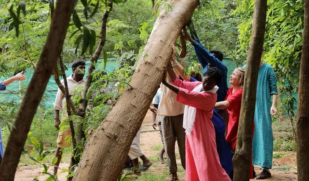 seva-in-the-gardens-of-dhyana-sangha