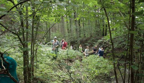 deep forest visit